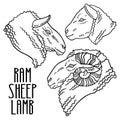A sheep, a ram and a lamb drawing