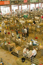 Sheep shed at the royal welsh show being prepared for judging Stock Photography
