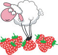Sheep on strawberry Stock Image