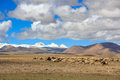 Sheep on Tibetan plateau with snowy peaks of the Himalayas in th Stock Photography