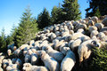 Sheep on top of the mountain Royalty Free Stock Photo