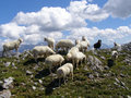 Sheep on top of a mountain grazing Royalty Free Stock Photos