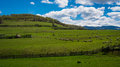 Sheeps grazing on green field hills with beautiful blue sky and clouds Stock Image