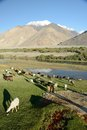 Sheeps grazing on a hill flock of in pamir tajikistan Stock Photo