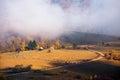 Sheeps in gurghiu mountains romania Stock Photos