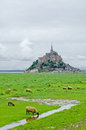 Sheeps near Mont Saint Michel. Normandy, France. Royalty Free Stock Photography
