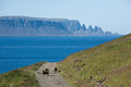 Sheeps on a road gravelroad in iceland with peaks in backround Stock Image