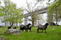 Sheeps in springtime Stock Photography