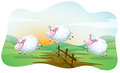 Sheeps three jumping over the fence Royalty Free Stock Photo