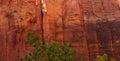 Sheer cliffs confine the virgin river on forested riverside walk in zion national park utah Stock Image