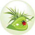 Sheet with ladybird. Spring concept Stock Photos
