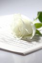 Sheet music white rose c portrait photograph of a book with a Royalty Free Stock Photo