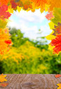 Shelf with colorful fall leaves autumnal frame wood from Royalty Free Stock Image