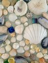 Shell arrangement Royalty Free Stock Photo