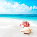 Shell on the beach brown sand Stock Image