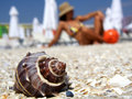 Shell on beach with girl on background Stock Photography