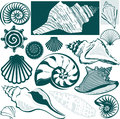 Shell collection clip art of various types of seashell Royalty Free Stock Image