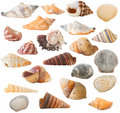 Shell Collection, isolated Royalty Free Stock Photography