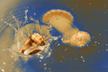 Shell falling in sea water with splash Royalty Free Stock Images
