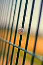 Shell a on the fence Royalty Free Stock Photography