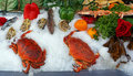 Shell fish for sale at the market Royalty Free Stock Photos