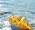 Shell in foam Stock Photo