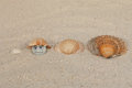 Shell game sea shells in the sand with a pearl under a sea Royalty Free Stock Photos