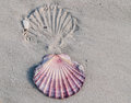 Shell imprint with opposing in sand Royalty Free Stock Photos