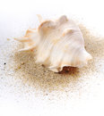 Shell ob sand on near sea in summer Stock Photography