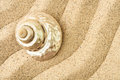 Shell on a sand Royalty Free Stock Photo