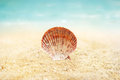 Shell on the sand beach summer background Royalty Free Stock Photo