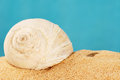 Shell on sand large snail the beach Royalty Free Stock Photos