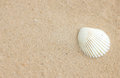 Shell on sand single of Stock Photography