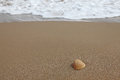 Shell on a sandy beach Royalty Free Stock Photography
