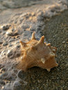 Shell and sea foam Stock Images