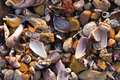 Shell and seaside background shells rocks on a beach making a colourful Stock Photography