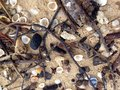 Shell shellfish mollusc clam bivalve on the beach Royalty Free Stock Photography