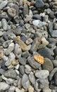 A shell on a stones beach coloured Royalty Free Stock Photos