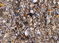 Shell texture of sand and in various colours Stock Image