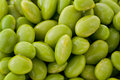 Shelled Edamame Royalty Free Stock Image