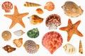Shellfish on Isolated White Background Royalty Free Stock Photo