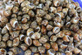 Shellfish for sale in market Royalty Free Stock Images