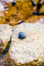 Shellfish stone on in island Royalty Free Stock Photo