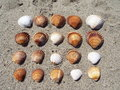 Shells aligned on the sand in beautiful colors of beach next to sea Stock Photo