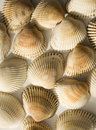 Shells background Stock Photos