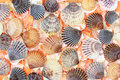 Shells background with colorful sea Stock Images