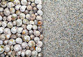 Shells background sea with copy space summer top view Royalty Free Stock Photo