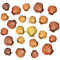 Shells background (vector) Royalty Free Stock Image