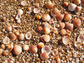 Shells on the beach Royalty Free Stock Photo