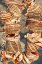 Shells broken in sunset light Royalty Free Stock Photos